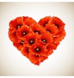 flower heart red poppies vector image