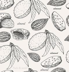 Seamless pattern with almonds on white background vector
