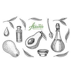 Tropical avocado set of evergreen fruit plant vector