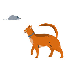 An abyssinian cat watches grey mouse vector