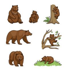 Brown bears vector