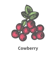 Bunch of ripened red cowberry vector