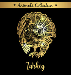 golden and royal hand drawn emblem of farm turkey vector image