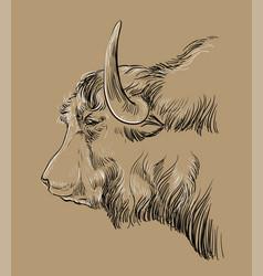 Head yak hand drawing brown vector