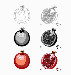 Set pomegranate cut garnet vector