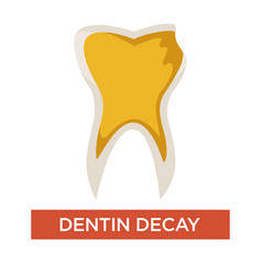 dentin decay isolated dental care and medicine vector image