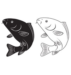 fish carp vector image