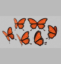 Orange monarch butterfly set isolated background vector