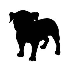 pug purebred dog sitting in side view with shadow vector image