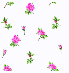 wild light violet roses rosa canina flowers vector image