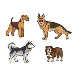 dogs different breeds in color set1 vector image