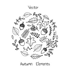 drawn set autumn leaves in sketch style vector image