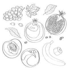 Set grapes pomegranate vector