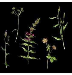 Set of watercolor drawing flowers vector