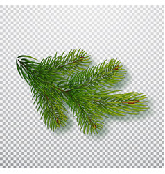spruce branch isolated on background christmas vector image