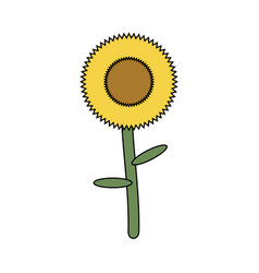 sunflower icon image vector image