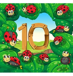 Number 10 with 10 ladybugs on leaves vector image vector image
