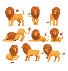 proud powerful lion character in different actions vector image vector image