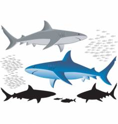 sharks and fish isolated images vector image vector image