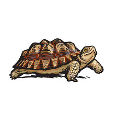 african spurred tortoisecheerful turtle walking vector image