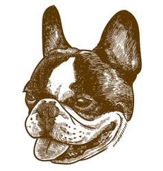 Engraving french bulldog head vector