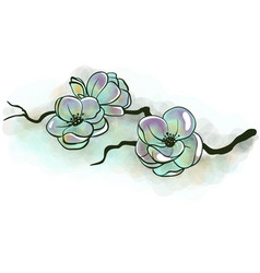jasmine flowers on a branch vector image
