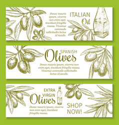 olive oil sketch banner of green branch and fruit vector image