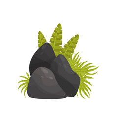 black stones and tropical plants element of vector image