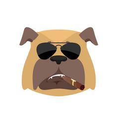 Dog cool serious avatar emotions pet smoking vector