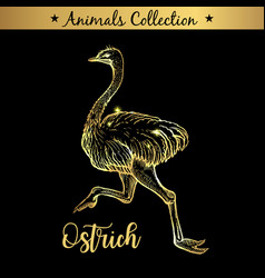Golden and royal hand drawn emblem of farm ostrich vector