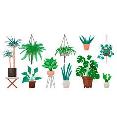 Popular indoor plants on white background vector