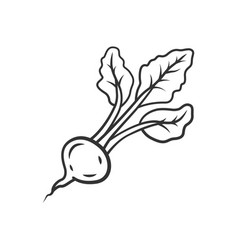 Radish linear icon vector
