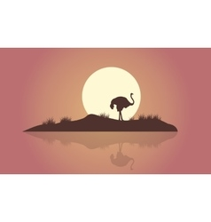 Silhouette of Ostrich scenery with reflection vector image