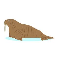 walrus icon big marine mammal isolated on white vector image