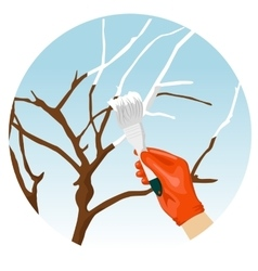 Whitewashing of trees in the spring in garden vector image