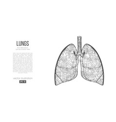 abstract silhouette polygonal organ lungs vector image