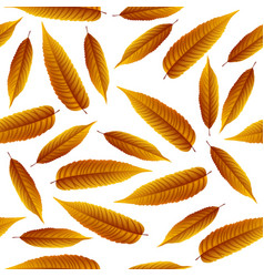 brown rowan leaves isolated on white background vector image