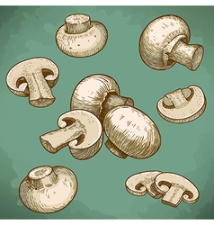 engraving champignons set retro vector image