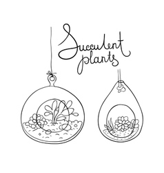glass terrariums with succulents set vector image