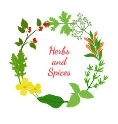 hebs spices - arugula mustard basil thymedill vector image