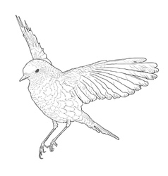 Soaring bird with spread wings hand drawn vector
