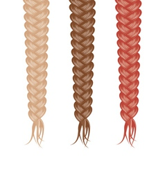 Three braids vector