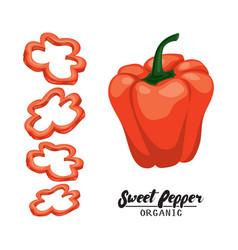 cartoon sweet pepper ripe red vegetable vector image vector image