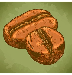 engraving two coffee beans retro vector image vector image