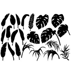 tropical jungle leaves silhouettes set vector image