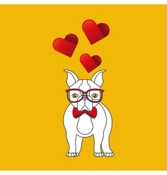 cute couple dog pet with glasses bow heart vector image
