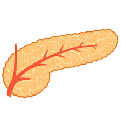Pancreas vector