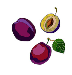plum sliced plum half plum vector image
