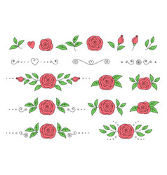 set pink roses with green leaves vector image