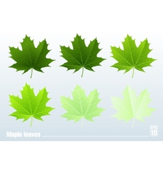 Green maple leaf Set vector